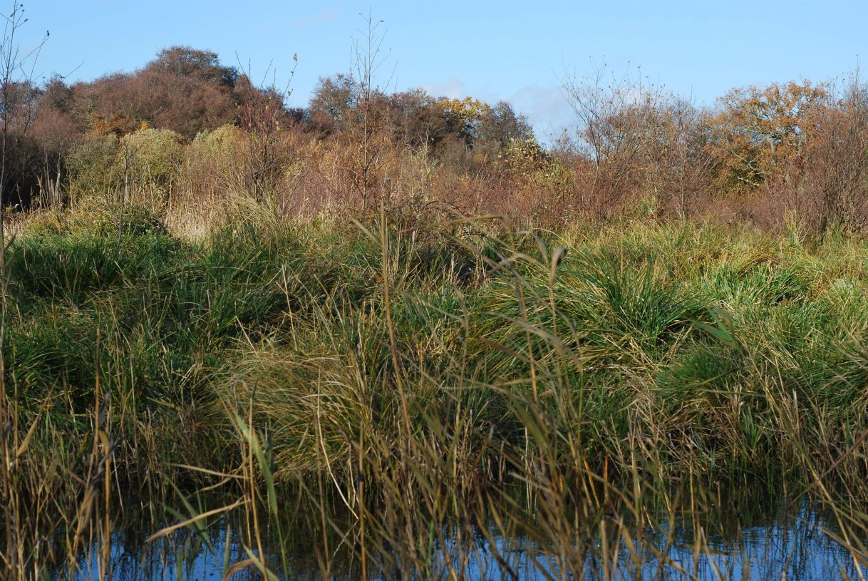 "Now recruiting for another fully-funded PhD! ""Geochemical constraints on the hydrological restoration of groundwater-dependent wetlands in lowland catchments"""
